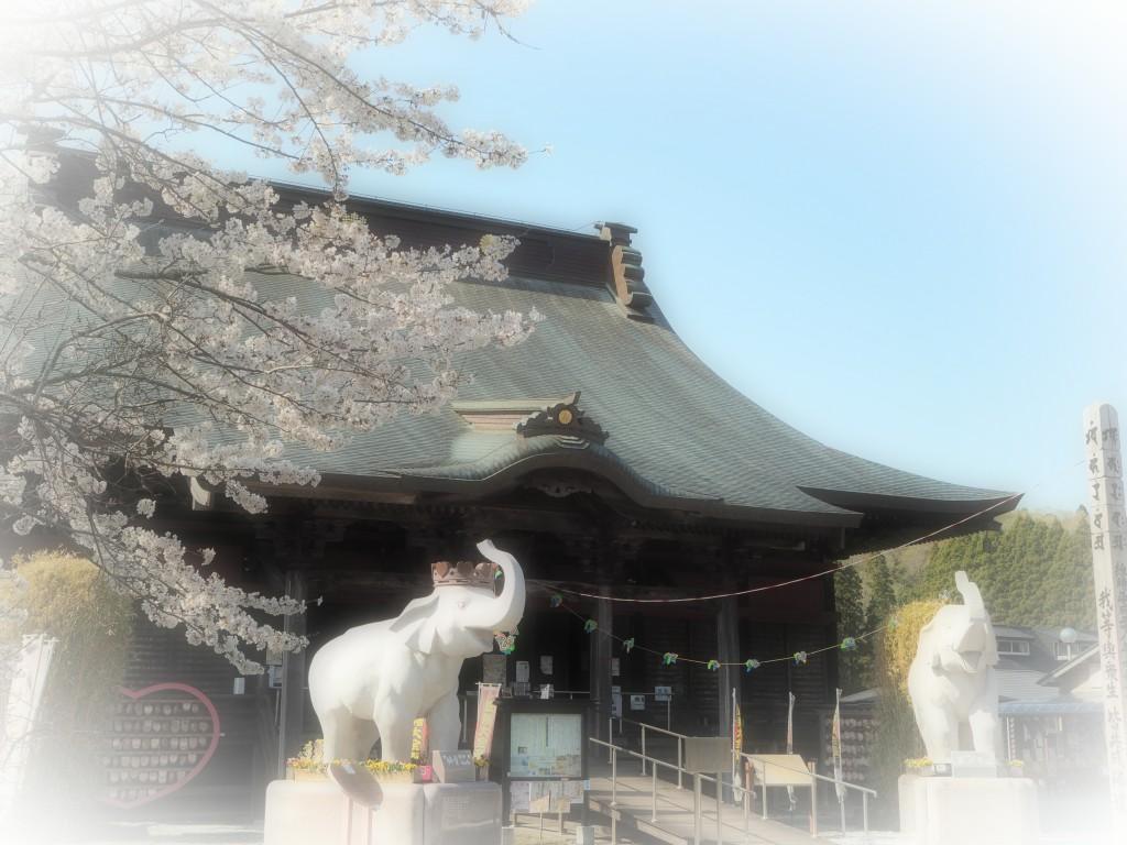 今週末が見頃!長福寿寺では桜が満開です♪