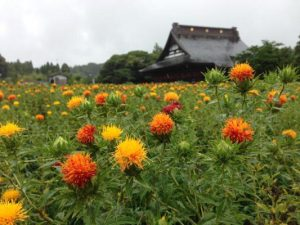 [期間限定]紅花のご朱印がいただけます。(6/1~6/30)