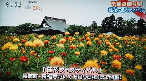 フジテレビで長福寿寺の紅花が放映されました!
